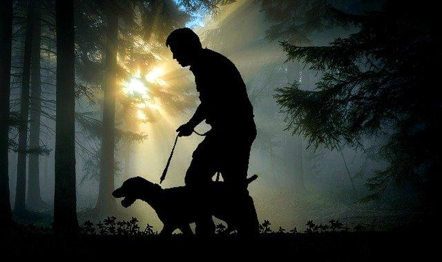 akcesoria dla psów myśliwskich - las