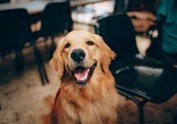 preparat przeciw wypadaniu sierści u psów